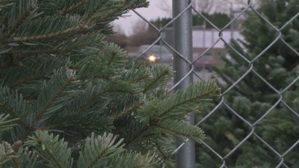 Christmas Tree Shortage.Recession Caused Christmas Tree Shortage Could Mean Higher