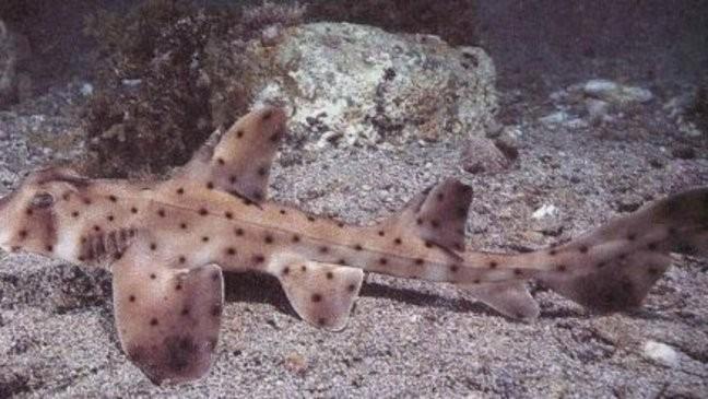 Aquarium: Man posed as salt supplier to get access to aquarium